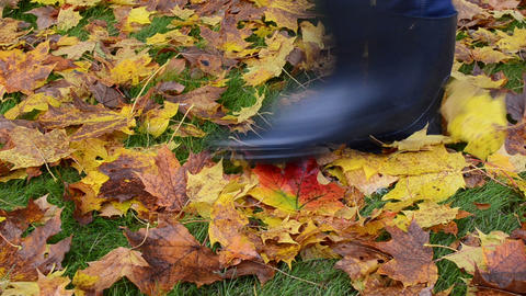 colorful autumn tree leaves meadow grass woman rubber boots walk Footage