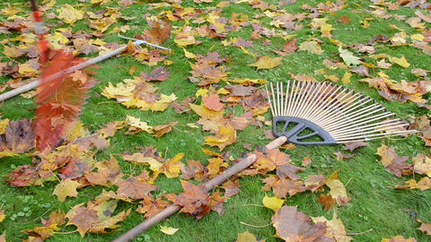 three leaf rake tool lie meadow grass covered leaves worker take Footage