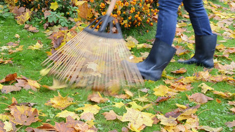 woman rubber boots rake autumn maple tree leaves parterre Footage