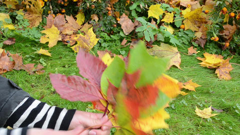 hand pick various color form tree leaves. cute autumn bunch Footage