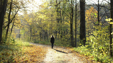 blond beautiful woman autumn forest road tree leaf sunlight Footage