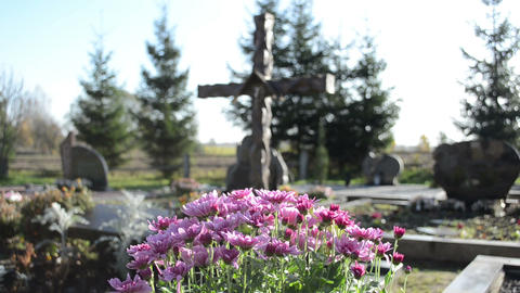 chrysanthemums flowers grow new grave cemetery monuments cross Footage