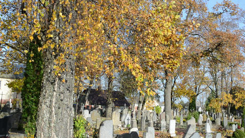 colorful autumn birch tree branch grow rural country cemetery Footage