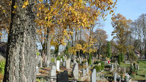 people walk rural cemetery autumn birch tree branches move wind Footage