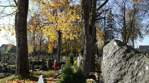 kid child red walk old rural cemetery graveyard autumn Footage