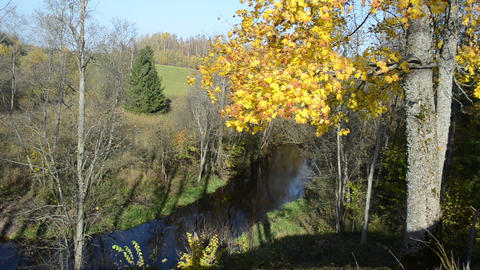 autumn maple tree branch leaves forest river water flow downhill Footage