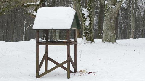 wooden bird feeder park birds looking food winter Footage