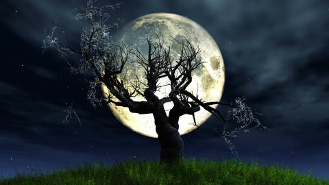 Lonely Tree 01 under Full Moon Stock Video Footage