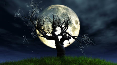 Lonely Tree 01 under Full Moon Animation