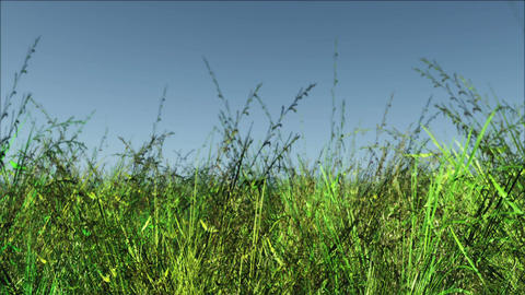 Meadow 01 Animation