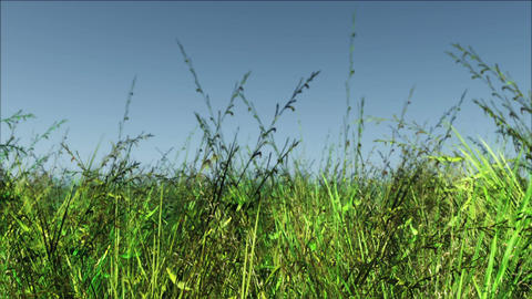 Meadow 01 Stock Video Footage