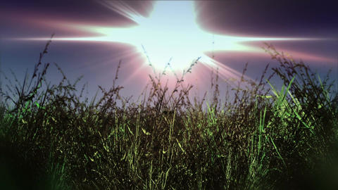 Meadow 03 Stock Video Footage