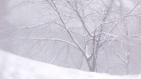 The Snowfall in Mt. Hakkoda,Aomori,Japan Stock Video Footage