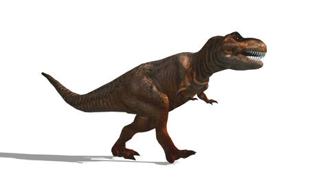 恐竜 T-REX Stock Video Footage