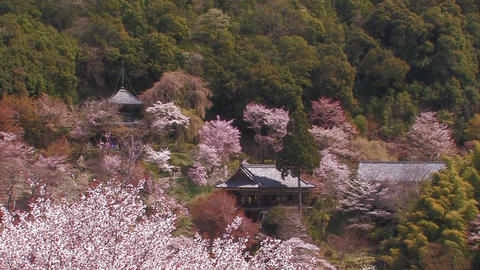 Spring landscape in Mt.Yoshino,Nara,Japan_2 Stock Video Footage