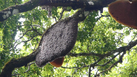 Beehive at tree Stock Video Footage