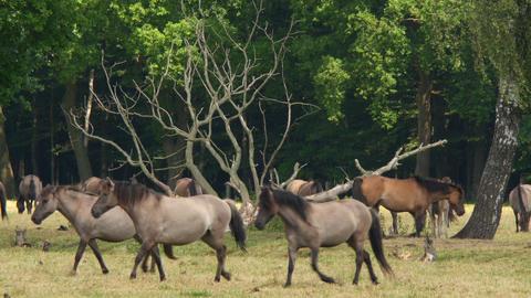 wild horses running 11654 영상물