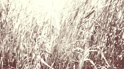 Grass In The Field stock footage
