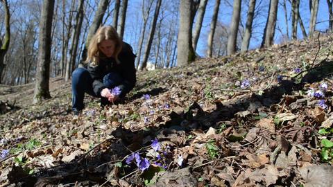 blonde girl in the woods picks violet Footage