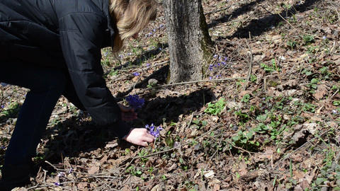 girl in the forest reaps first spring flowers Footage