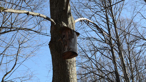 tree bark made nesting boxes hung on a tree branch Footage