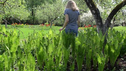 pretty woman walk between fern flowers trees in spring garden Footage