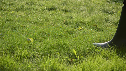 Sunlight on early morning lawn grass. man with rubber boots walk Footage