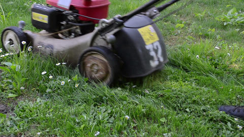 lawn with daisy flowers and gardener lawn cutter mower cut grass Live Action