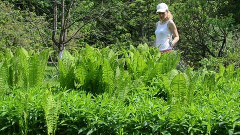 girl watering fern plants with hand sprayer sprinkler tool Footage