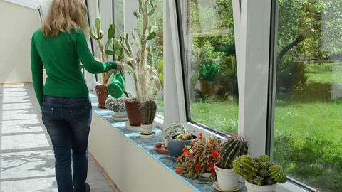 cactus plants grow in greenhouse and sexy girl with watering can Footage