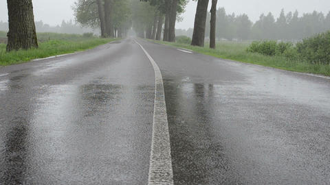 rain drops fall on asphalt road reservation between tree alley Footage