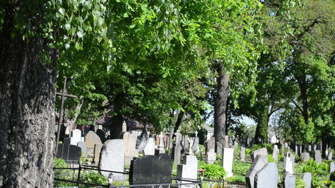 Old birch trees grow in rural cemetery and grave tomb stones Footage