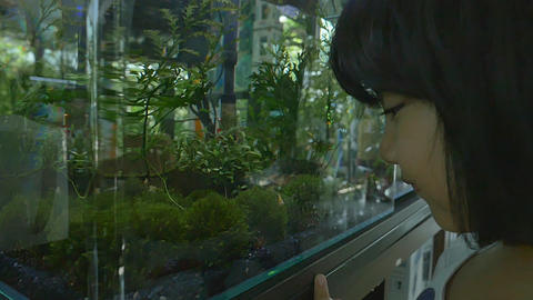 Asian girl looks at fish swimming in aquarium Footage