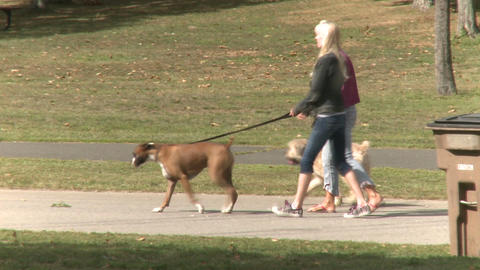 Women Walking Their Dogs (2 of 5) Footage