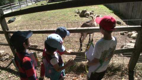 Young boys at petting zoo (2 of 4) Footage