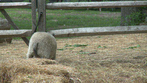Sheep on farm Stock Video Footage
