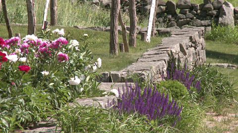 Flowers blowing in breeze Stock Video Footage