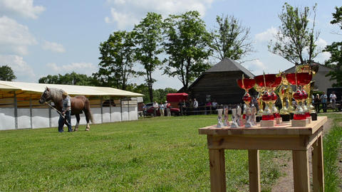 Winner cups and farmer man master show saddle heavy horse Stock Video Footage
