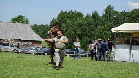farmer man master demonstrates his saddle heavy horse in... Stock Video Footage