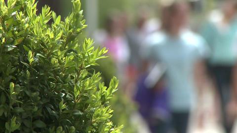 People walking down sidewalk on Main Street (3 of 5) Stock Video Footage