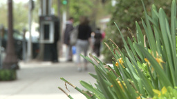People walking along sidewalk with plants on the side (3... Stock Video Footage