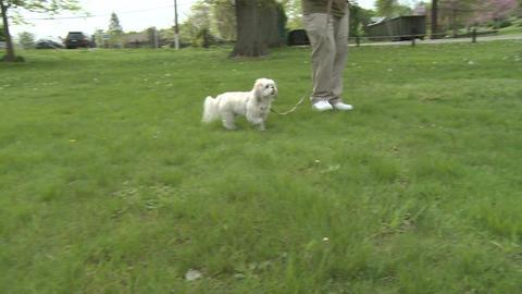 Man's best friend (2 of 3) Stock Video Footage