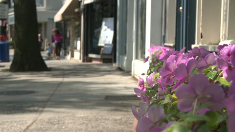 Beautiful flowers along a city street (4 of 5) Stock Video Footage