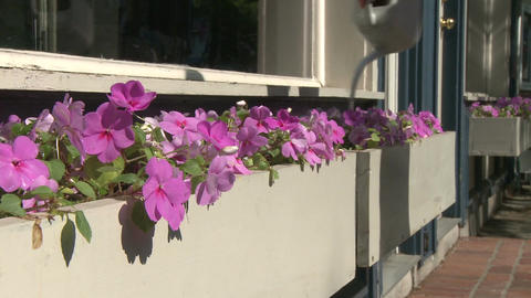 Beautiful flowers along a city street (3 of 5) Footage