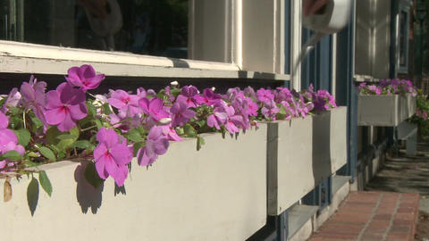 Beautiful flowers along a city street (3 of 5) Stock Video Footage