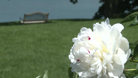 Gorgeous spring flowers (1 of 3) Stock Video Footage