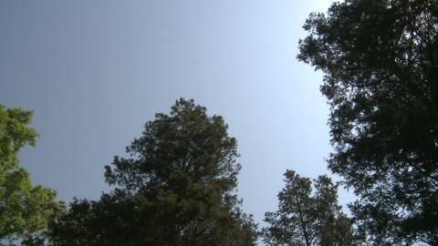 Beautiful meditation garden (4 of 7) Stock Video Footage