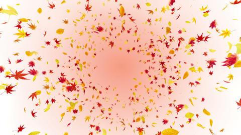 Autumn Leaf front Br 2 4 K Animation