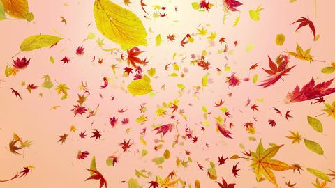 Autumn Leaf front Dr 2 4 K Animation