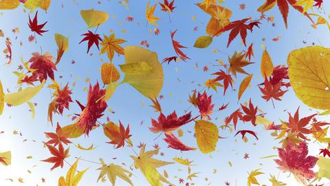 Autumn Leaf tornado Br 2 4 K Animation